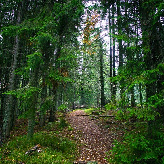 Подорож карпатськими стежками