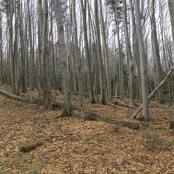 Лес у села Орив