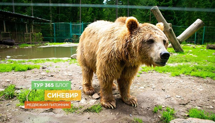 Медвежий питомник