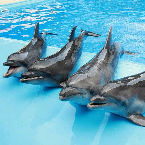 Дельфинарий Оскар