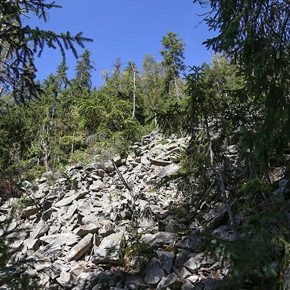 Восхождение на вершину горы Хомяк в Карпатах