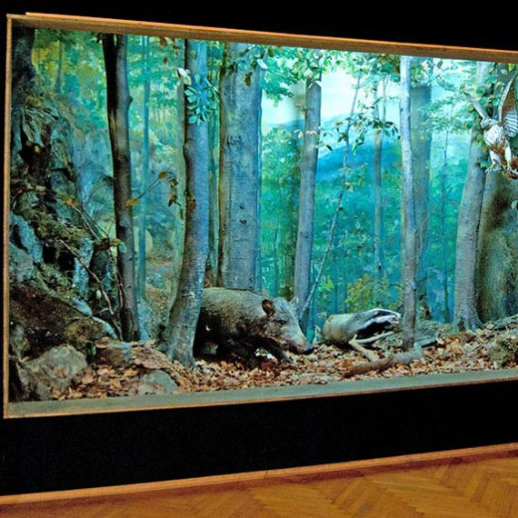 Музей экологии гор в Рахове в Карпатах