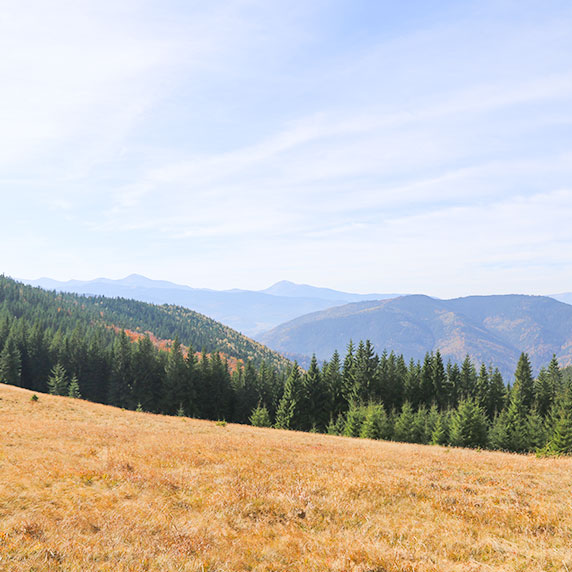 Урочище Пиги, гора Ягодная в Карпатах