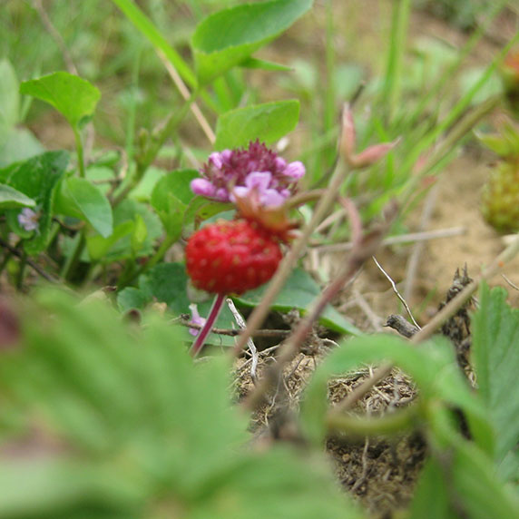 Природа на горе Ягодная в Карпатах