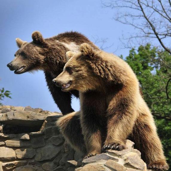 Медвежий питомник в Карпатах