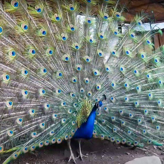 Зоопарк в Яремче в Карпатах