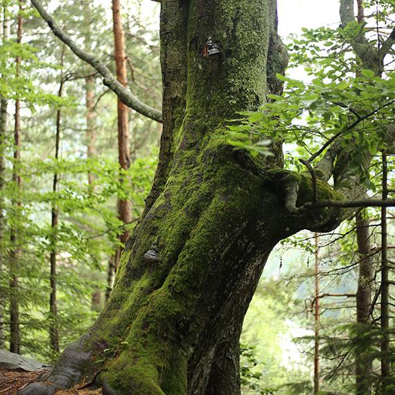 В лісі біля Яремче в Карпатах
