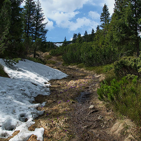 Природа біля озера Несамовитого в Карпатах